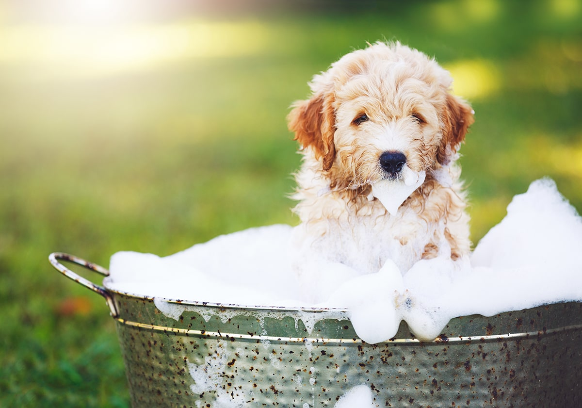 Preparing Your Home For a Puppy